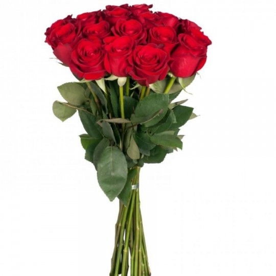 15 Red roses (70-80cm)