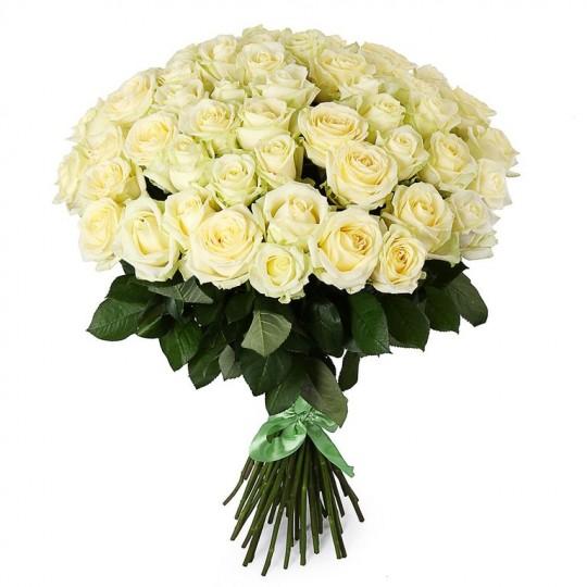 51 White roses (60-70cm)