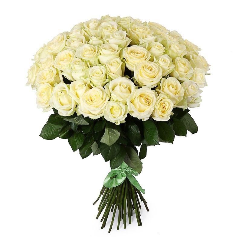 51 Balta rožė (60-70cm)