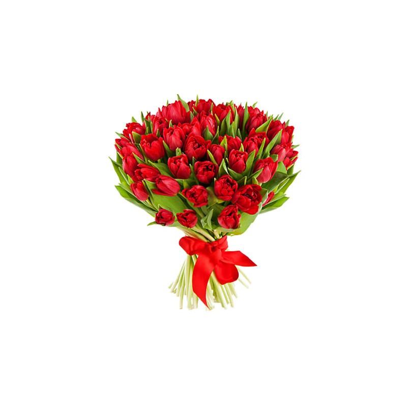 51 Raudona Tulpė