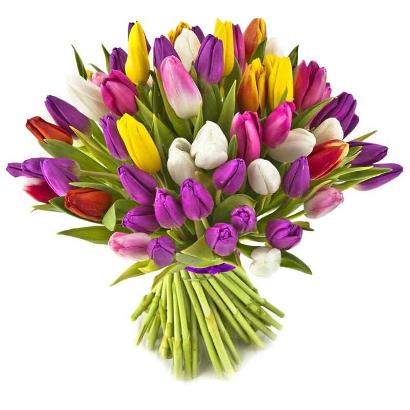 Įvairiaspalvės tulpės