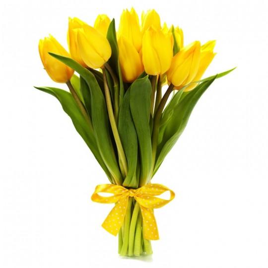 11 Tulpių
