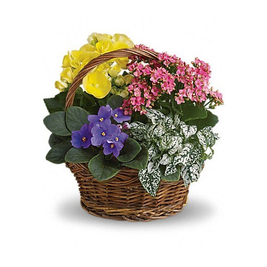 Pot plant composition